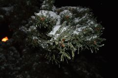 Nattjulgranfilial med snö och istappar royaltyfria bilder