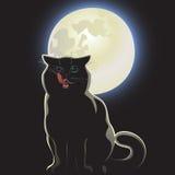 nattlig svart katt Arkivfoton
