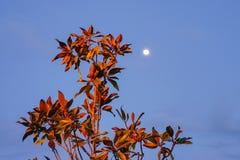 Nattmåne och träd Arkivfoton