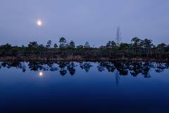 Nattmåne på träsket Royaltyfria Bilder