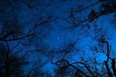 Nattmåne till och med filialerna av träd Arkivbild
