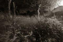 nattplats Arkivbild