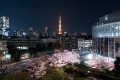 Nattsikt av den massiva körsbäret som blomstrar med det Tokyo tornet, Japan Royaltyfri Foto
