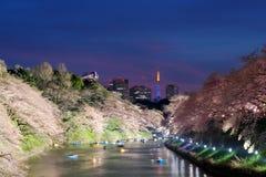 Nattsikt av den massiva körsbäret som blomstrar med det Tokyo tornet som tillbaka Arkivfoton