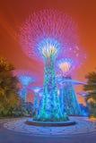 Nattsikt av den Supertree dungen på trädgårdar nära, Singapore Arkivfoto