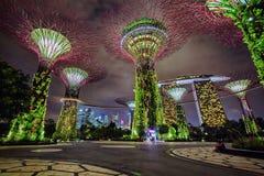 Nattsikt av trädgårdar vid fjärden, Singapore Arkivfoto