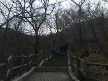 Nattsikt på maximumet av det Nanshan berget, Sydkorea royaltyfria foton
