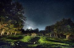 Nattskog med stjärnor royaltyfri fotografi