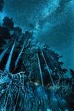 Nattskoglandskap med stjärnor royaltyfria foton