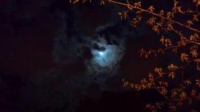 Nattskuggor arkivbild