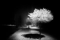 Nattsnöfall Fotografering för Bildbyråer