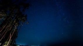 Natttimelapse i ett dynamiskt ljus för pinjeskog på sörjer från branden stock video