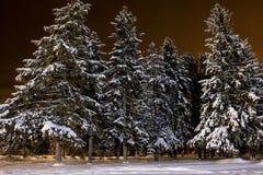 Nattvinterskog Arkivbild