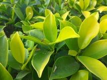 Natue met groene bladeren Royalty-vrije Stock Foto