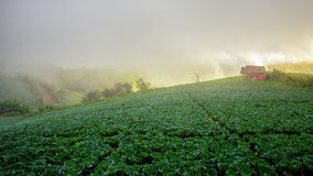 Natuer hill in morning Stock Photography