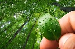 Naturökologie, Waldbewahrung lizenzfreies stockbild