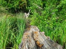 Natur和海 免版税库存照片