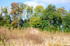 Natur颜色伪装 免版税库存图片