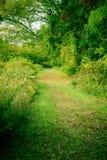 natur ścieżki s Zdjęcia Royalty Free