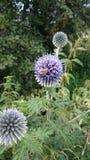 Natur, λουλούδια Στοκ Εικόνα