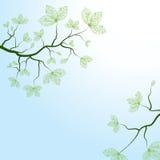 Natur Stockbilder