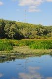 Natur Arkivbild