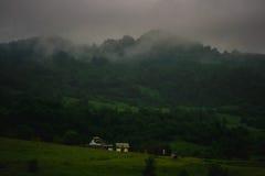 Natur Arkivfoto