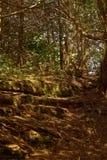 Natur (72) Fotografering för Bildbyråer