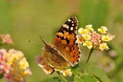 Natur Royaltyfria Bilder
