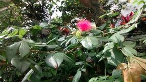 Natur _ Royaltyfri Foto