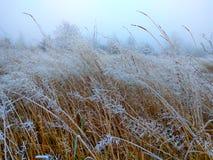 Natur fotografering för bildbyråer
