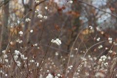 Natur Royaltyfri Fotografi