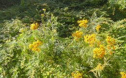 Natur Royaltyfria Foton
