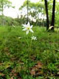 Natur Royaltyfri Foto