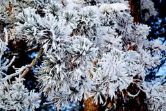Natur Altaya Stockfotografie