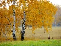 Natur Altaya Stockbilder