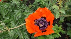 Natur, Anlage, Blumen, Schönheit, Ästhetik lizenzfreies stockbild