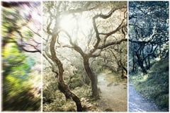 Natur Art High Quality royaltyfri fotografi