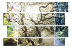 Natur Art High Quality royaltyfri bild