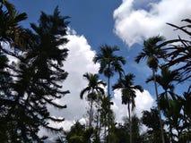 Natur Assam stockfotos
