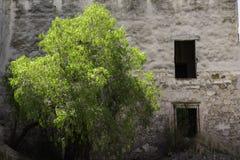 Natur att segra arkivbilder