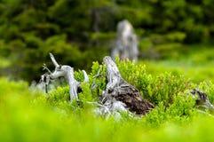 Natur auf die Oberseite von Wysoka Kopa stockbilder