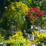 Natur auf See Ohrid macedonia lizenzfreie stockfotos