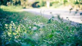 Natur auf Sideway Stockfotografie