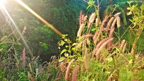 Natur auf vollem Licht lizenzfreie stockfotografie