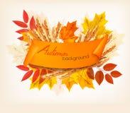 Natur Autumn Background With Colorful Leaves und Weizen Lizenzfreie Stockfotos