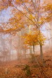 Natur Autumn Colorful Forest stockbilder