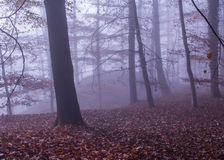 Natur Autumn Misty Forest Landscape lizenzfreie stockfotos