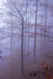 Natur Autumn Misty Forest Landscape Lizenzfreies Stockfoto