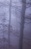 Natur Autumn Misty Forest Landscape stockfotografie